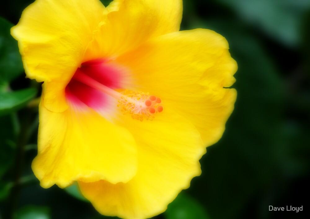 Soft Yellow by Dave Lloyd