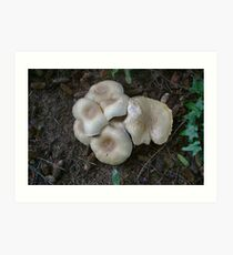 Mushroom Clump Art Print