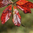 I bee leaf !!! by Poete100