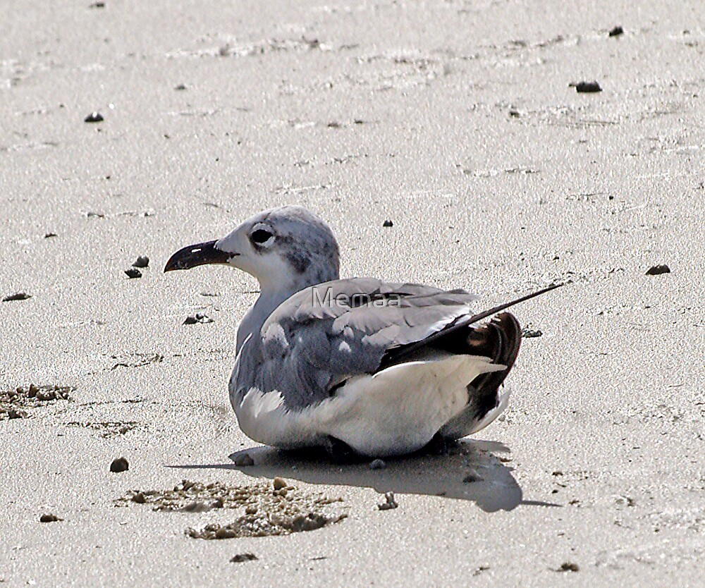 Sea Gull Resting by Memaa