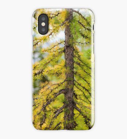 Larch Tree Closeup iPhone Case/Skin