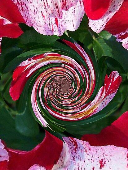 Tricolor Beauty In Polar Inversion Twist by Jonice