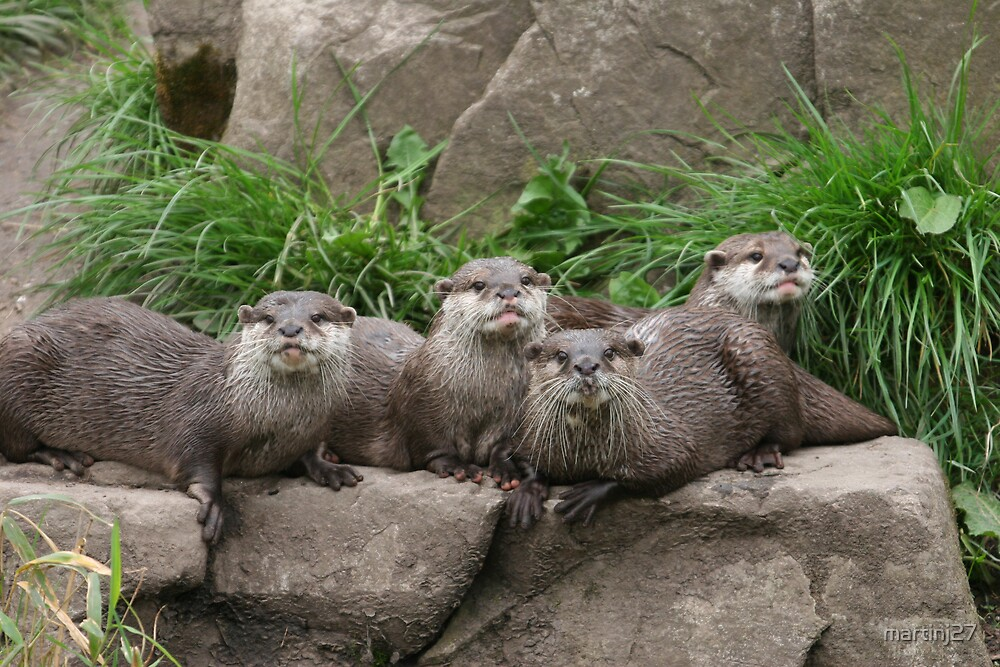 otters by martinj27