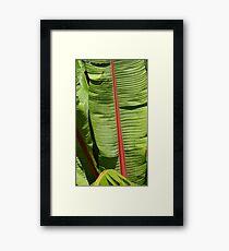 Unique nature Framed Print