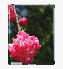 Kirschblüte iPad-Hülle & Klebefolie