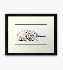 Cute Maine Coon Kitten Playing Framed Print