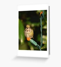 Pacific Northwest Holiday Decorations Greeting Card