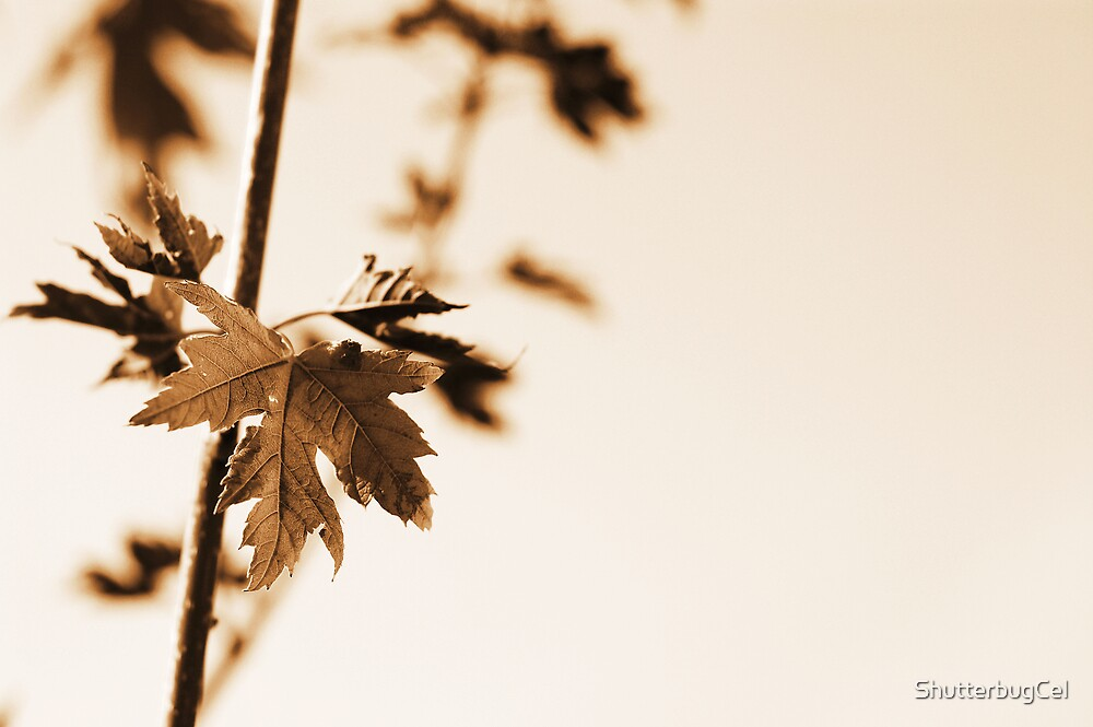 Changing Leaves by ShutterbugCel
