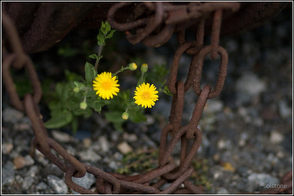 Weeds and Chains by solstone