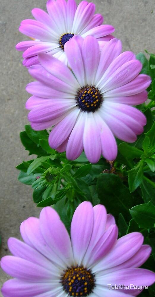 Purple Flowers by TabithaPayne