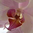 Orchid by Diane Petker