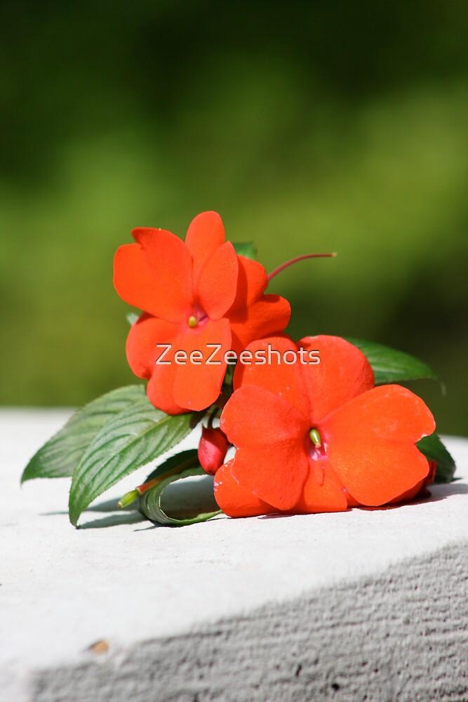 A red flower by ZeeZeeshots