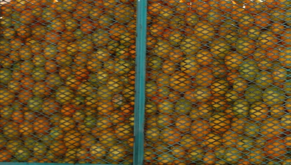 Captive Oranges by Kathryn Eve Rycroft