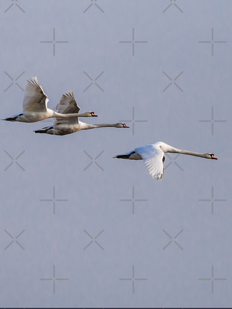 Family of Mute swans in formation by Dalyn