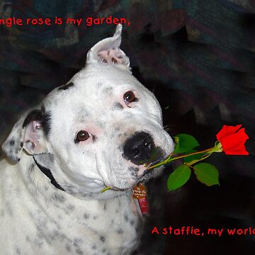 For the Love of Staffies by decoaddict