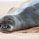 Herman the Hawaiian Monk Seal by Caleb Ward