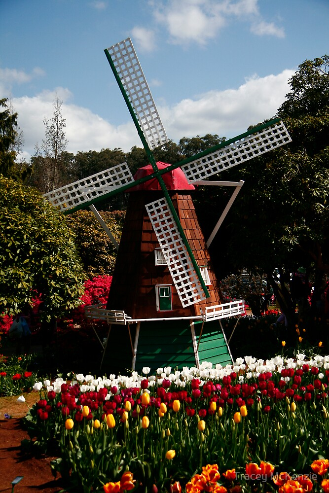 Windmill by Tracey McKenzie