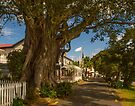 Olive Tree on Russell's Waterfront Street by Yukondick