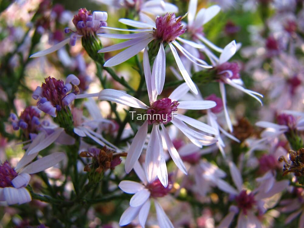Tiny Flowers by Tammy F