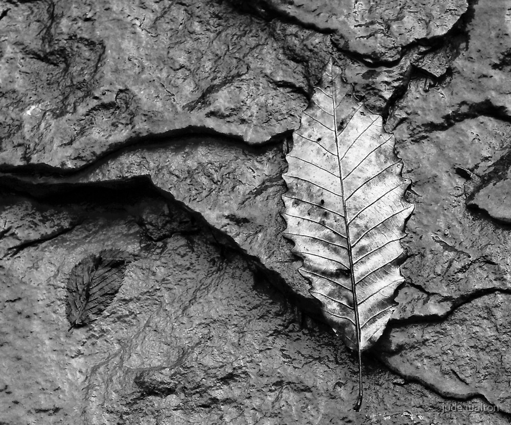 wet leaf and stone by jude walton