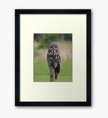 Great Gray Framed Print