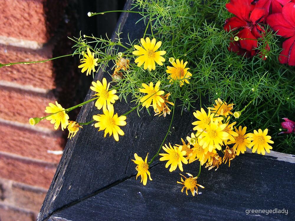 yellow sunshine by greeneyedlady