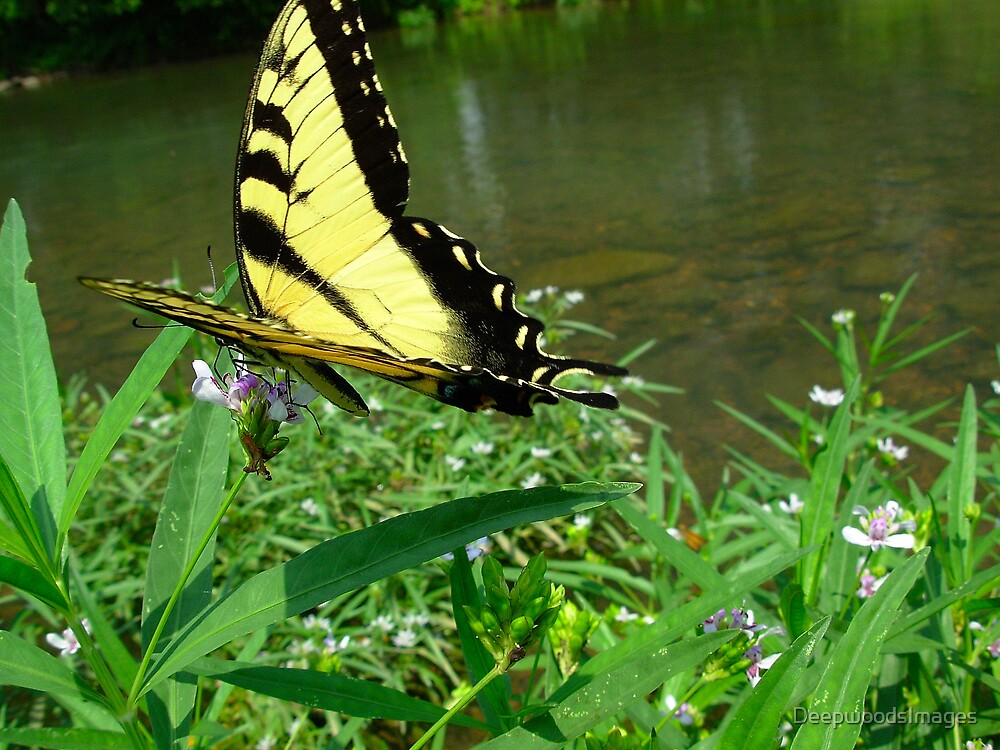 The big yellow butterfly by DeepwoodsImages
