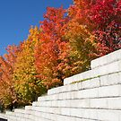 Wall of Maples by Martha Medford
