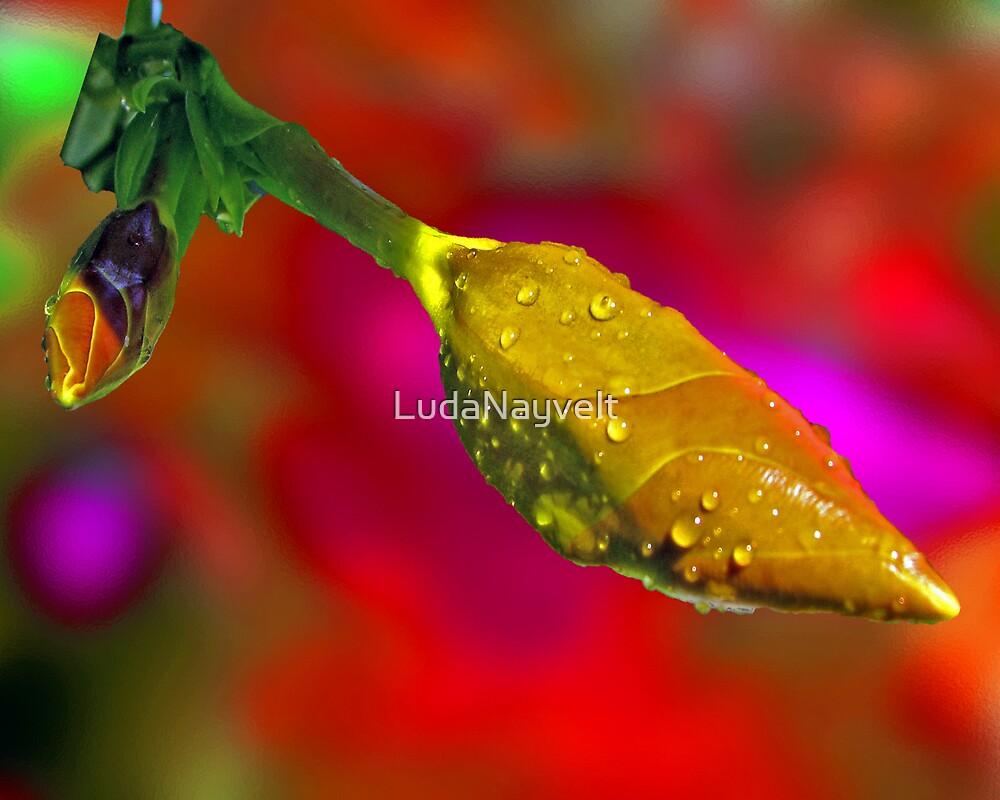 Drops of life by LudaNayvelt