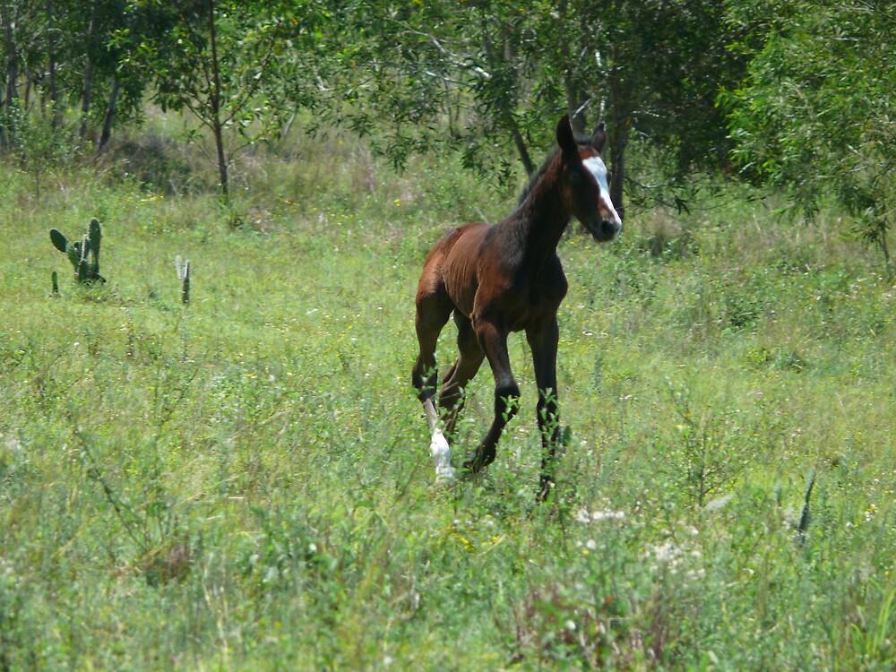 Trotting foal  by Tim Everding