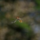 Hovering By by Biggzie