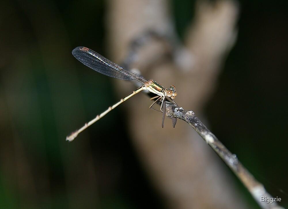 Damsel Fly having dinner by Biggzie