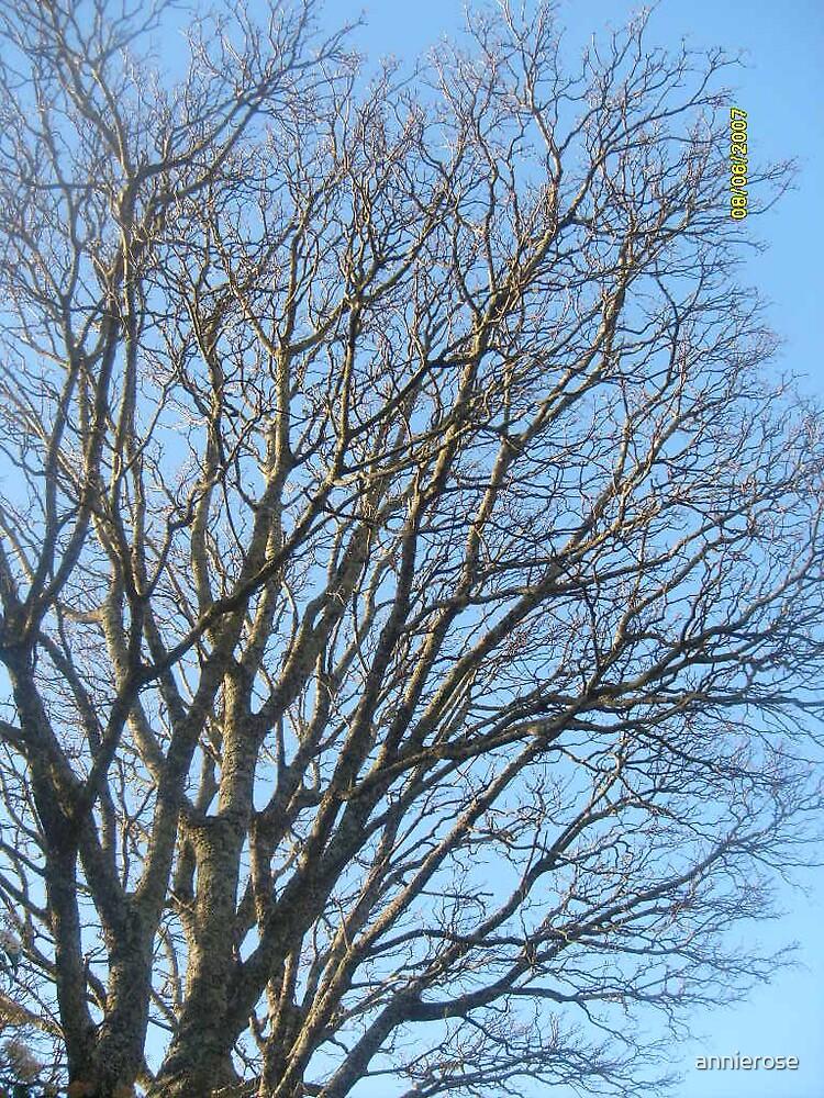 big tree by annierose