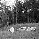 Field, White rock - Stone Mountain by Jon Julian