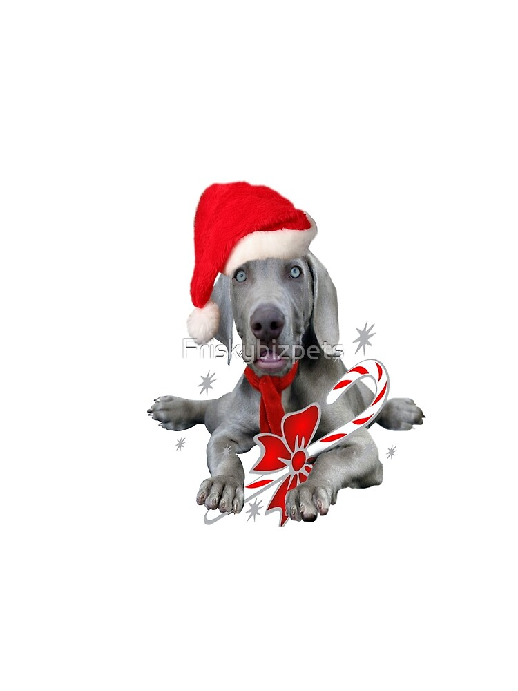 Weimaraner Baby with Teeth Missing Christmas Humor on cards, gifts ...