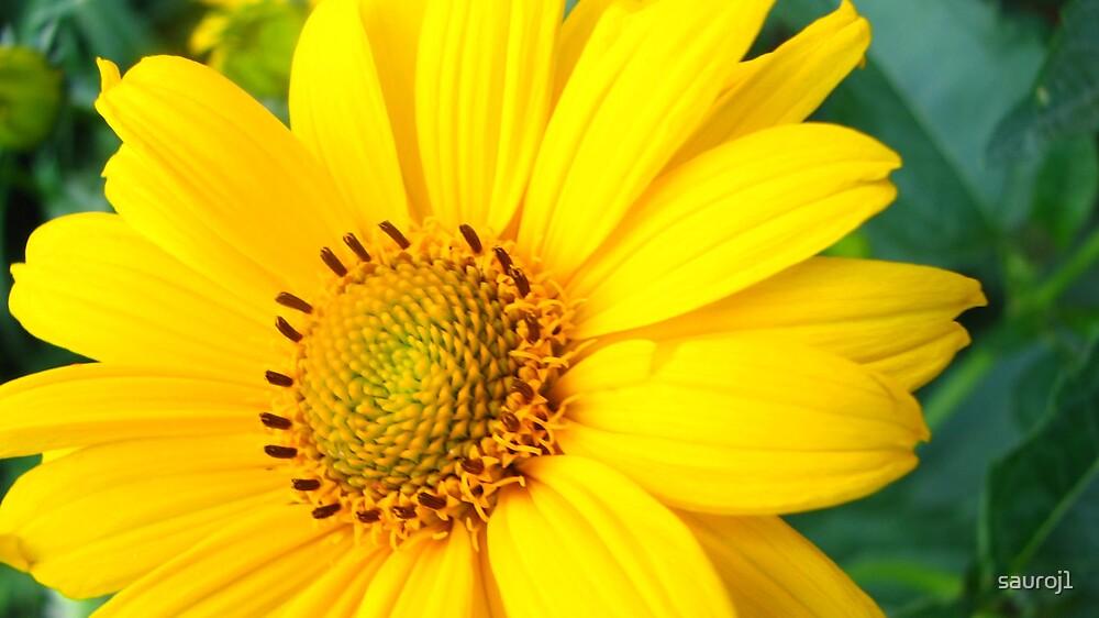 mellow yellow by sauroj1