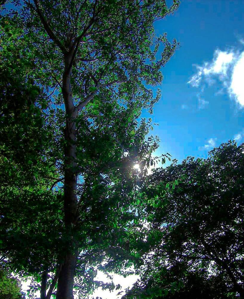 Reach for the sun. by Jamie  Mallard