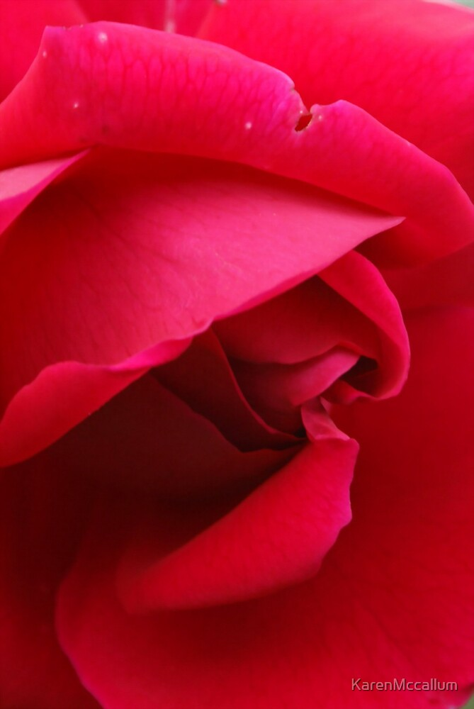 Red Rose by KarenMccallum