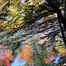Autumn Glory 2017 by Elfriede Fulda