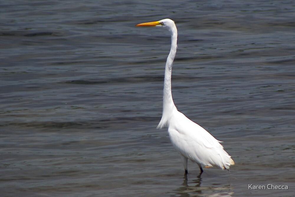 Wading Egret by Karen Checca