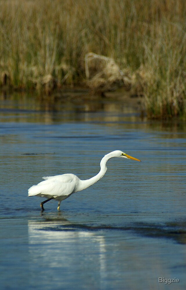 Egret by Biggzie