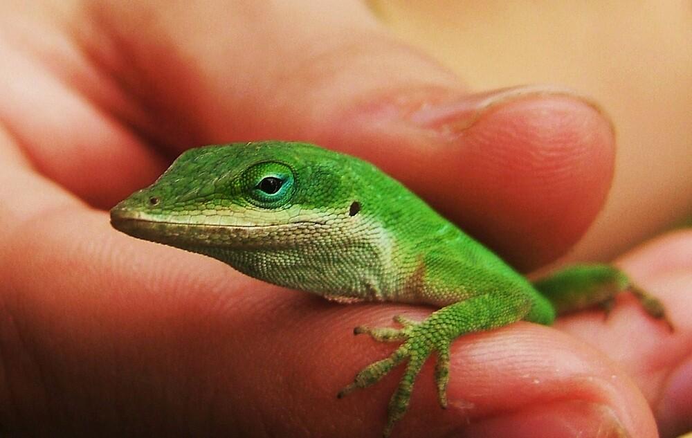 Green Lizard by Diana Forgione