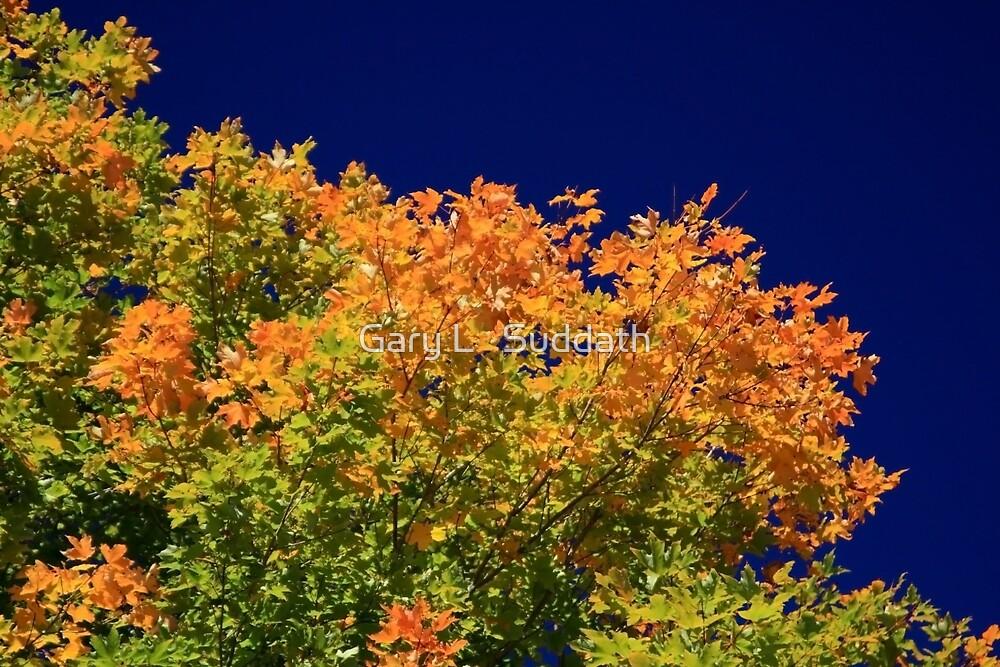Splendor Of Fall  by Gary L   Suddath