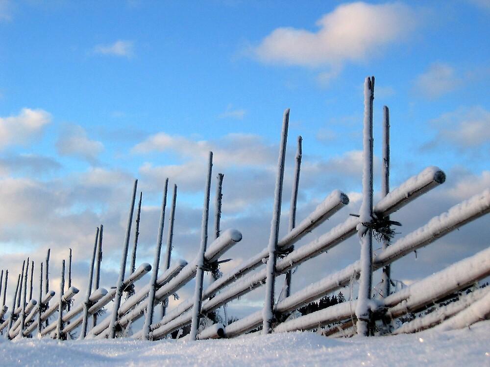 'Winter' by Petri Volanen