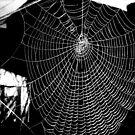 Spiders Web 2 by karenkirkham
