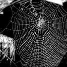 Spiders Web 3 by karenkirkham