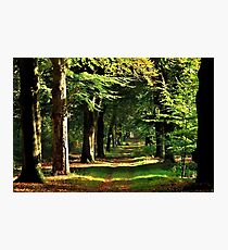 Walking in the October forest Photographic Print