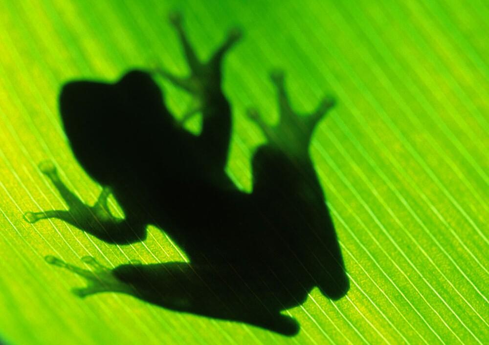 Tree Frog Green by John Brumfield