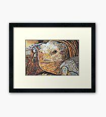 Tortoise Wildlife, photorealistic drawing Framed Print