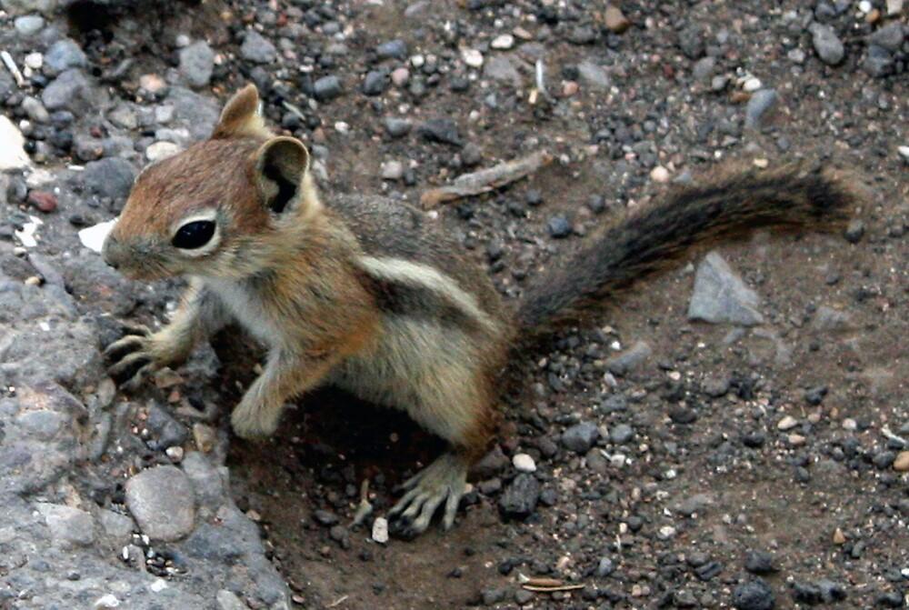 Squirrel by Tim craftmyphoto Farrell